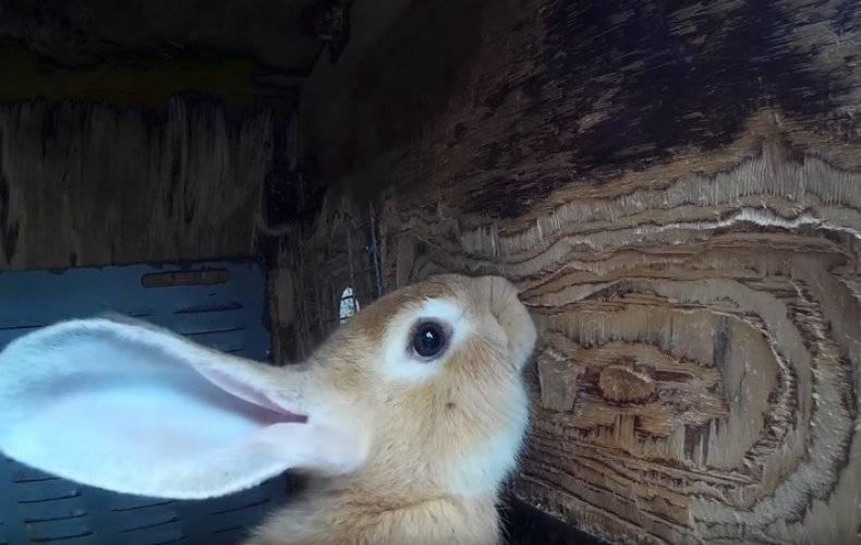 Кролики грызут клетки: что делать?