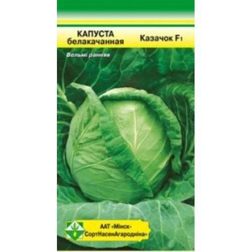 В чем особенность савойской капусты и как правильно ее выращивать?