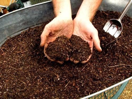 Можно ли ускорить рост петрушки и через сколько дней она взойдет после посева?