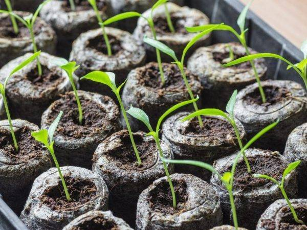 Чем подкормить огурцы для хорошего роста