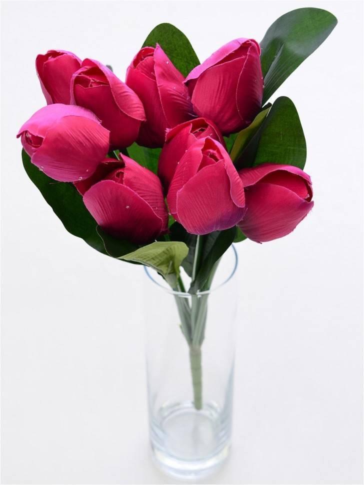 Садовая классификация растения тюльпан: группы с фото и названиями, виды и сорта тюльпанов