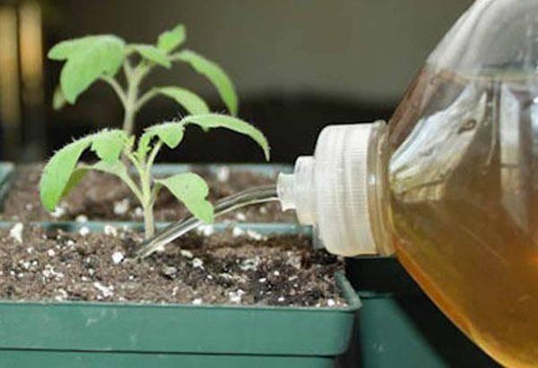 Эпин: свойства, применение для растений и семян