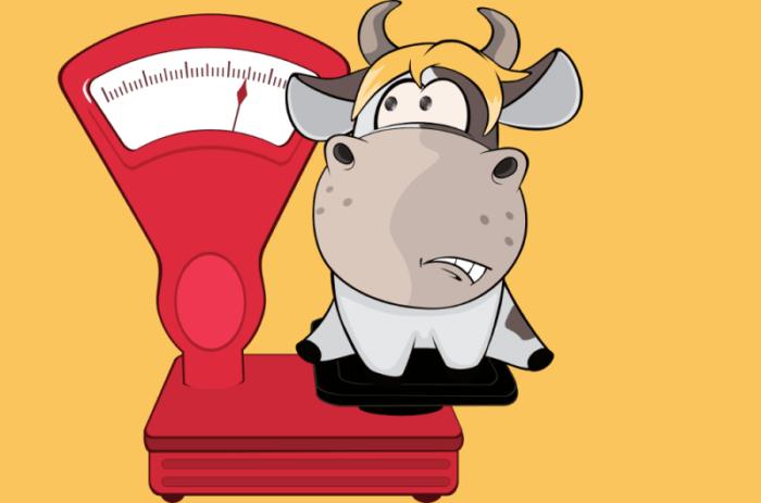Вес быка в среднем таблица