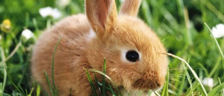 У кролика понос, что делать - причины, лечение и профилактика
