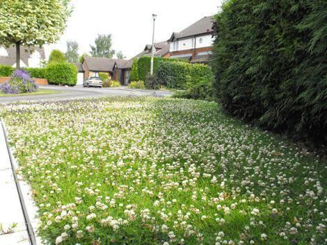 Создаем газон своими руками: выбор сорта травы, сезонные особенности посадки и ухода