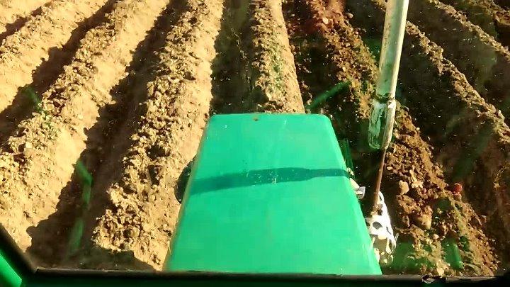 На какую глубину сажать картофель под лопату, картофелесажалкой, мотоблоком?