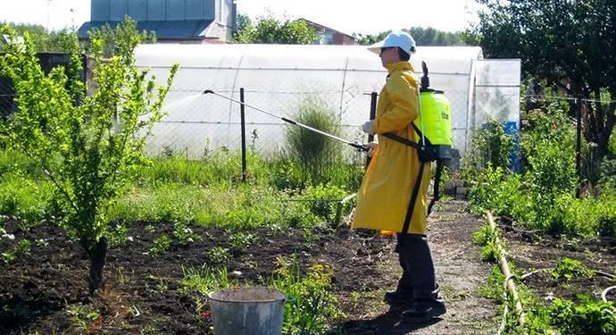 Медный купорос: как разводить раствор, опрыскивание, чем полезен для растений