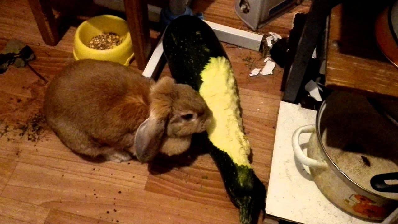Можно ли кроликам давать огурцы: в чём польза и вред, как давать