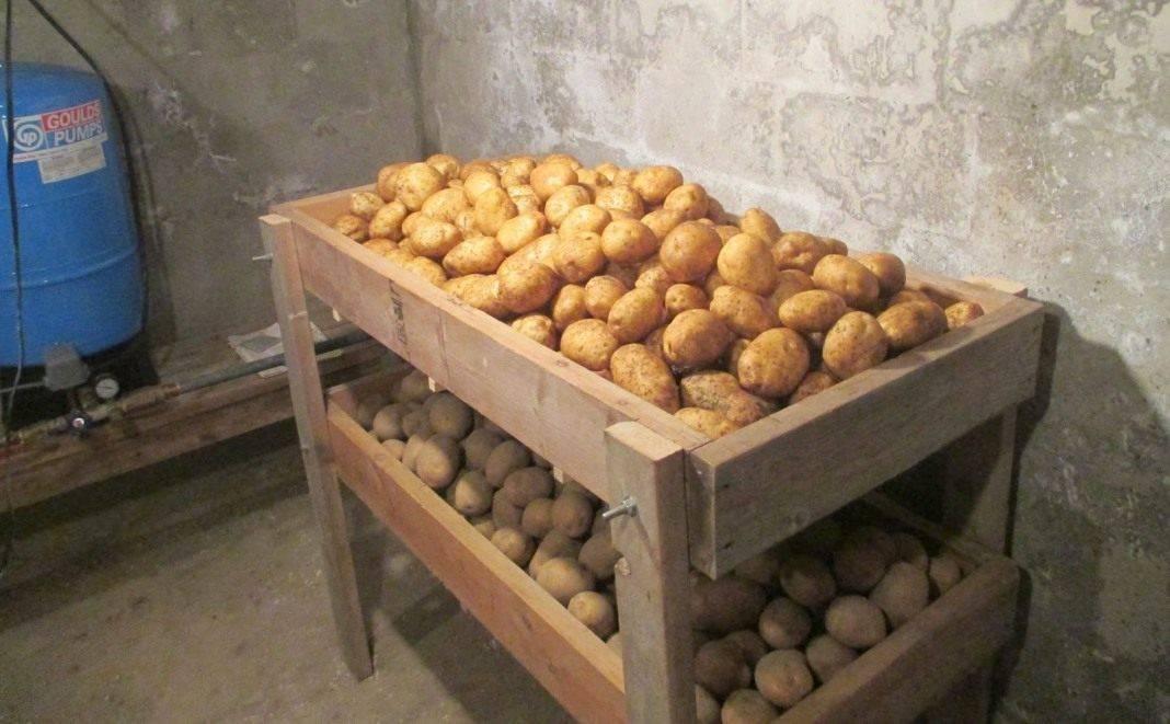 При какой температуре хранят картофель