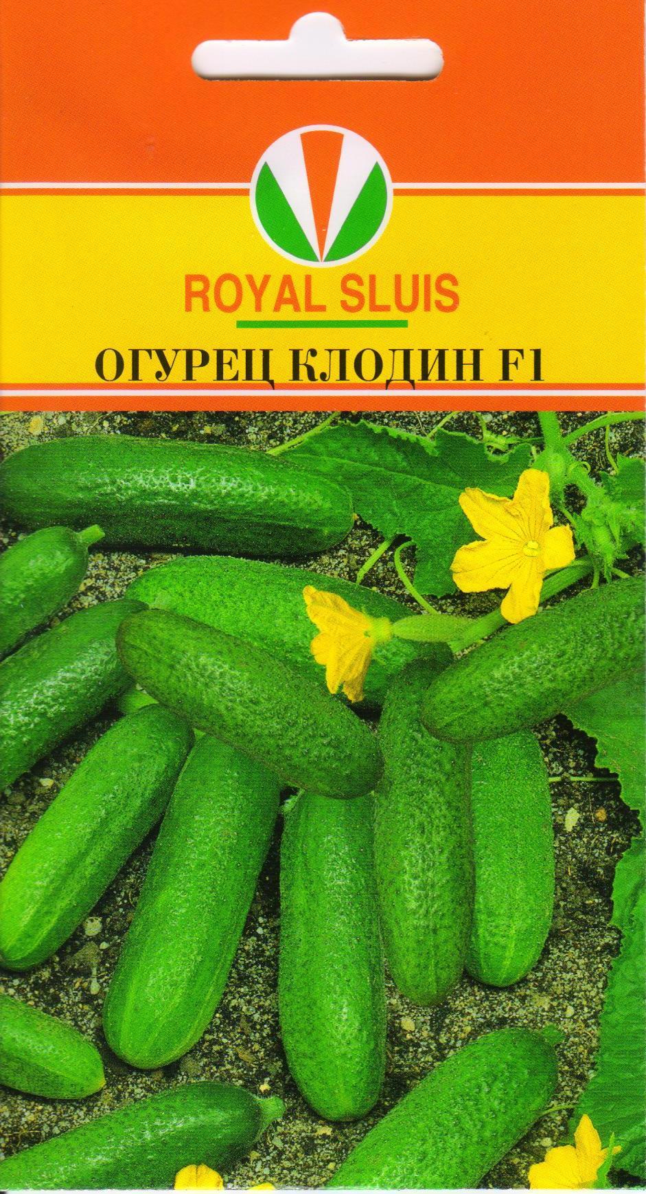 Раннеспелый индетерминантный гибрид огурцов «клодин f1»: фото, видео, описание, посадка, характеристика, урожайность, отзывы