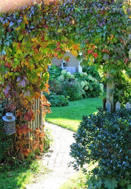 Девичий виноград в ландшафтном дизайне (22 фото) | дом мечты