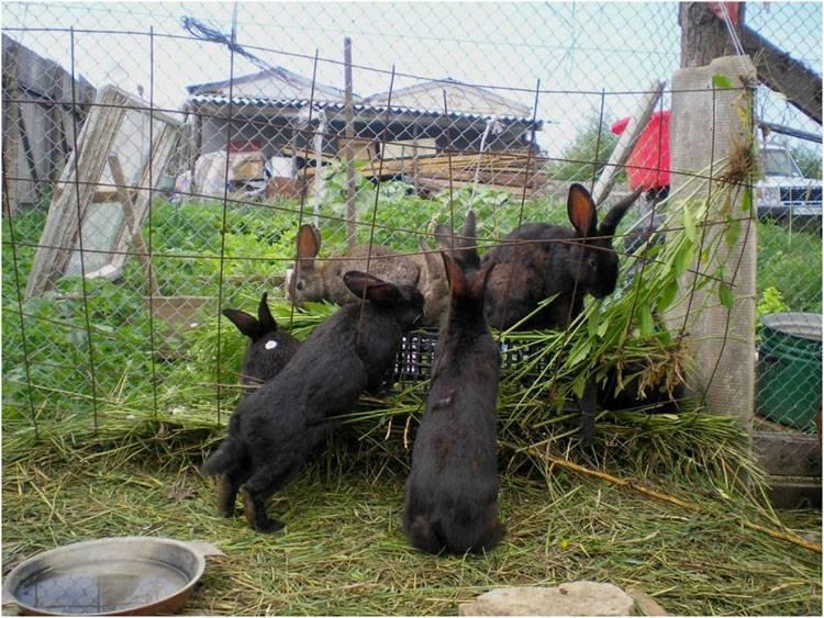 Вольер для кроликов: постройка своими руками, разведение, фото