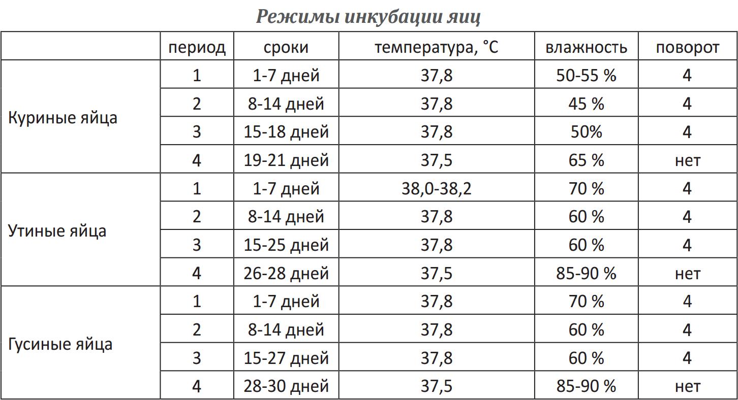 Инкубация утиных яиц: таблица с режимами. какими должны быть в инкубаторе температура и влажность? как вывести утят в домашних условиях? когда закладывать яйца уток?