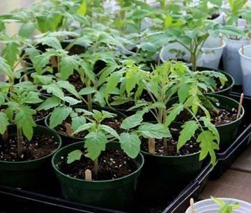 Стимуляторы и регуляторы роста для предпосевной обработки семян