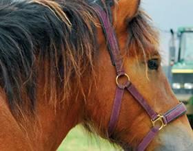 Сколько стоит лошадь в россии в рублях