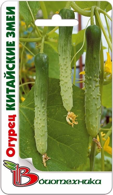 Особенности выращивания сорта огурцов китайское чудо