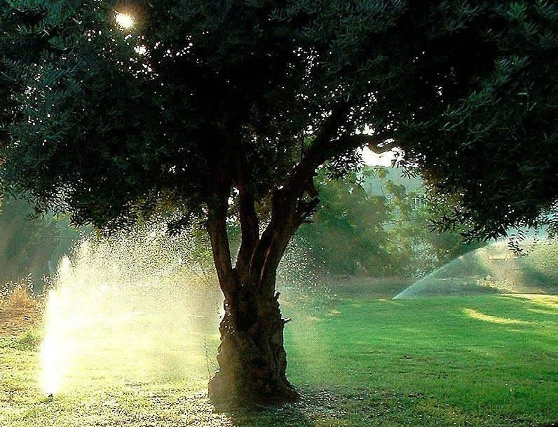 Как поливать плодовые деревья в саду  — секреты опытных садоводов