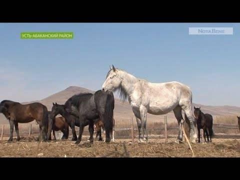 Как лошадь рожает: беременность, срок вынашивания жеребенка, роды