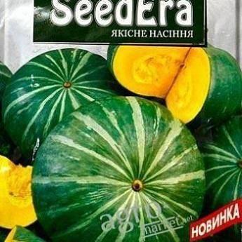 Семена тыквы – лучшие сорта для открытого грунта