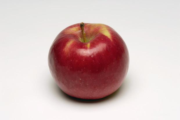 Особенности посадки и ухода за яблоней сорта рихард