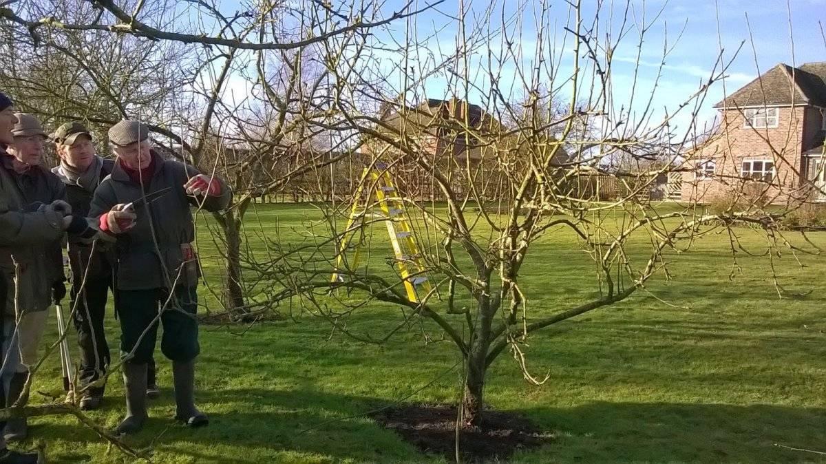 Выбор удобрений и подкормка яблони весной