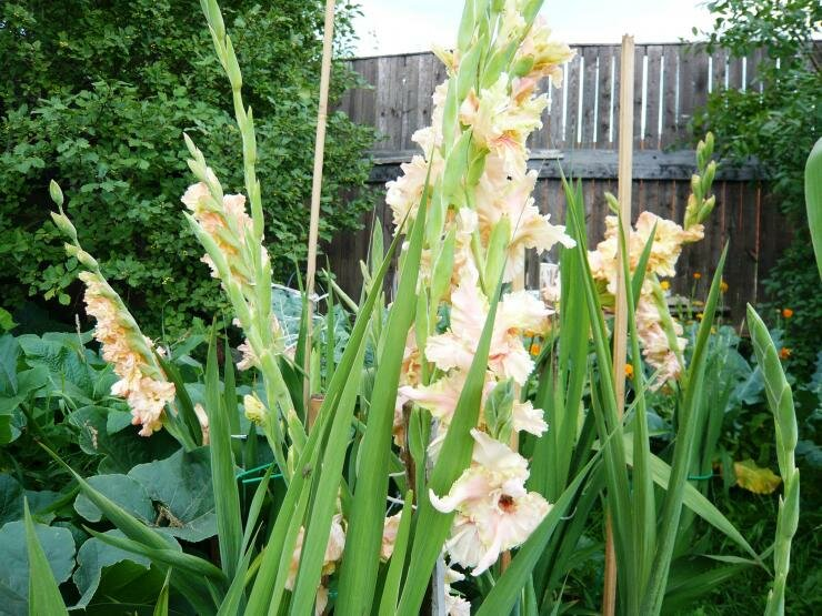 Древесная зола – натуральное удобрение и средство борьбы с вредителями