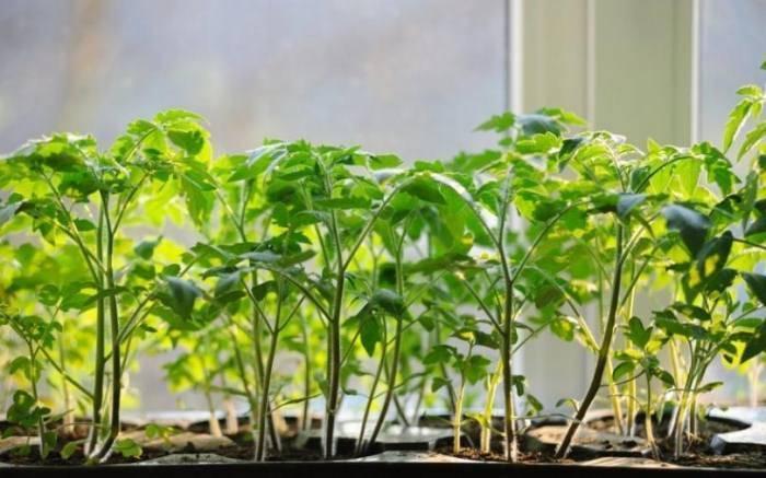 Инструкция по применению янтарной кислоты для растений