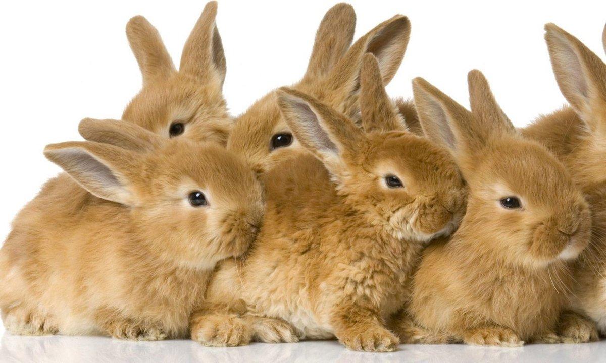 Мохнатые барабанщики: почему кролики стучат задними лапами?