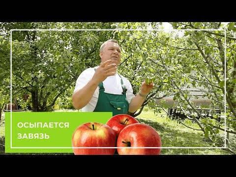 Почему не плодоносит абрикос: основные причины и методы борьбы с проблемой