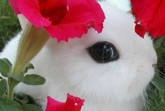 Лечим болезни глаз у кролей