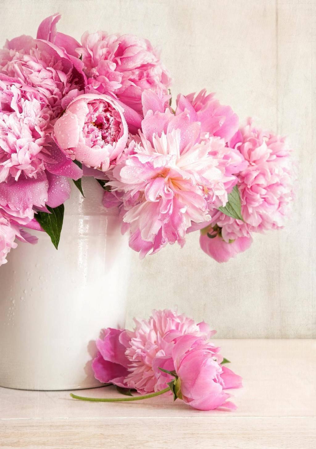 Самые простые способы засушить цветы, сохранив их красоту :: инфониак