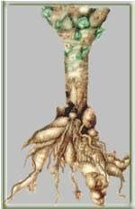 Кила капусты: меры борьбы, причины, признаки и профилактика