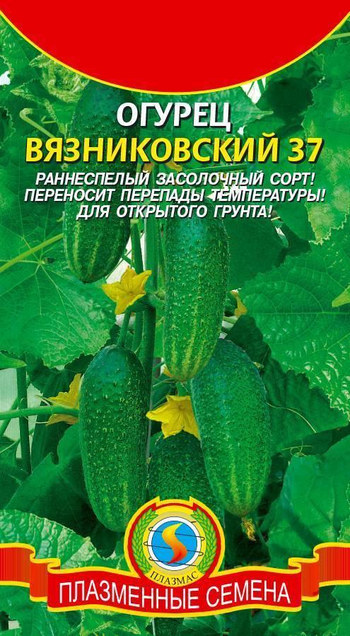 Огурец родничок: описание сорта, плюсы и минусы, выращивание и уход, отзывы, фото