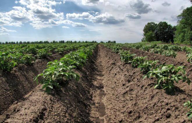 Подготовка почвы осенью под картошку. правила подбора удобрений для разных видов почвы