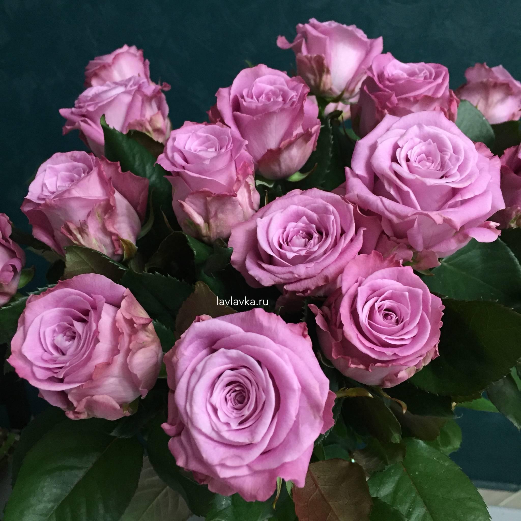 Плетистые розы, цветущие все лето: сорта зимостойкие - выбор, посадка и уход за ними!