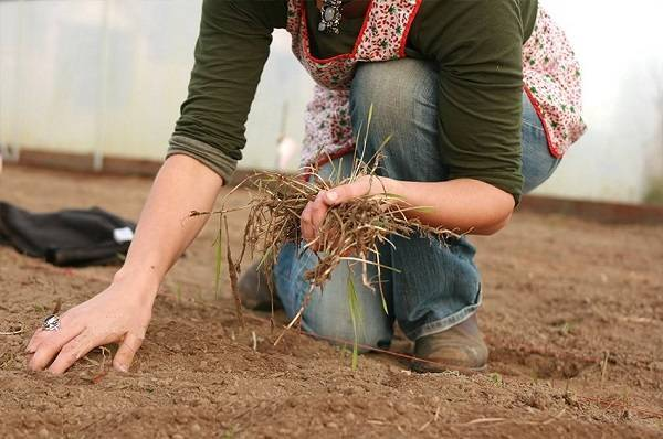 Выращивание огурцов в теплице: посадка, полив, подкормка, подвязывание, болезни, сбор урожая