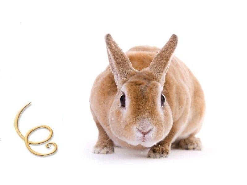Распространенные гельминтозы или виды глистов у кроликов