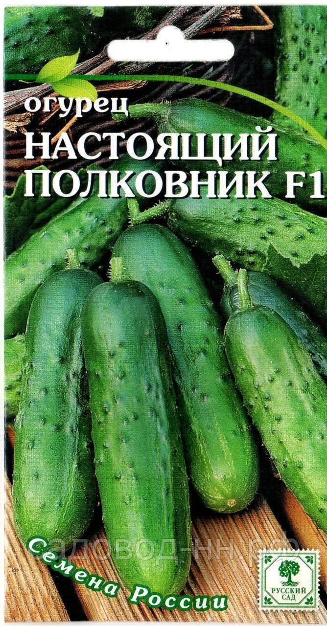 Сорт огурцов артист f1: описание, отзывы, фото, посадка и уход, достоинства и недостатки, урожайность