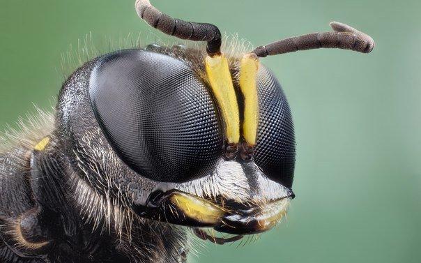Укус осы, польза или вред осиного яда
