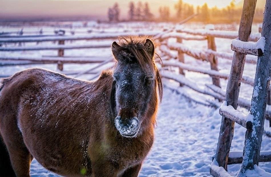 Мешать молоко лошади