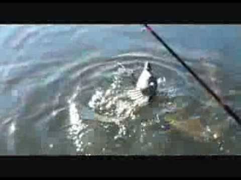 Утиная охота: способы охоты на дикую утку