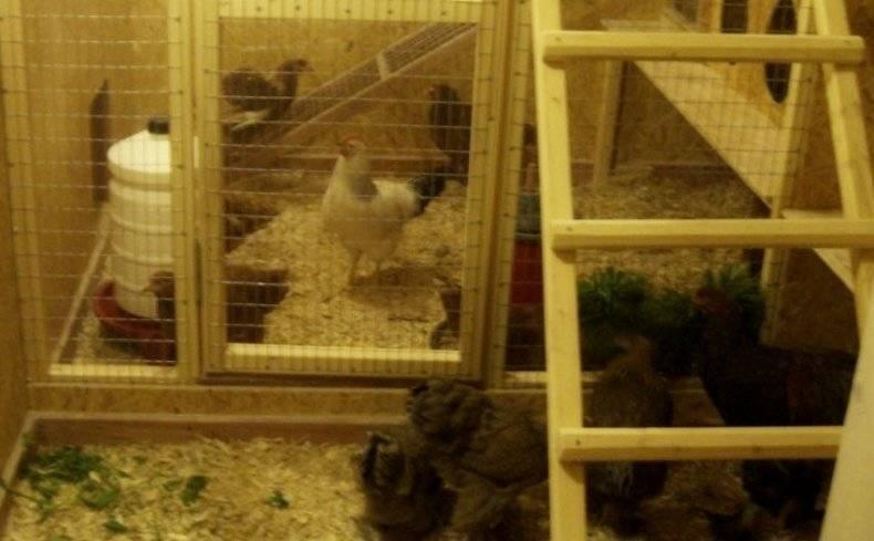 Нравы птичьего двора