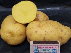 Сорт картофеля ред леди: описание и характеристика, отзывы