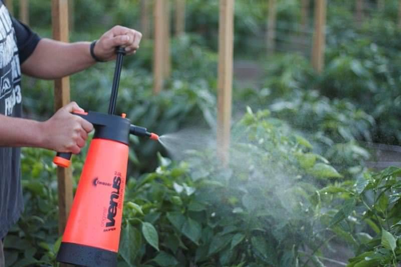 Эпин: инструкция по применению для рассады томатов, как использовать, опрыскивать