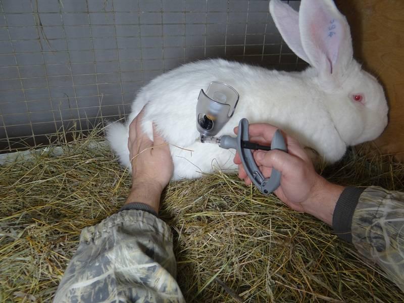 Вздутие живота (тимпания) у кролика - симптомы, лечение, препараты, причины появления | наши лучшие друзья