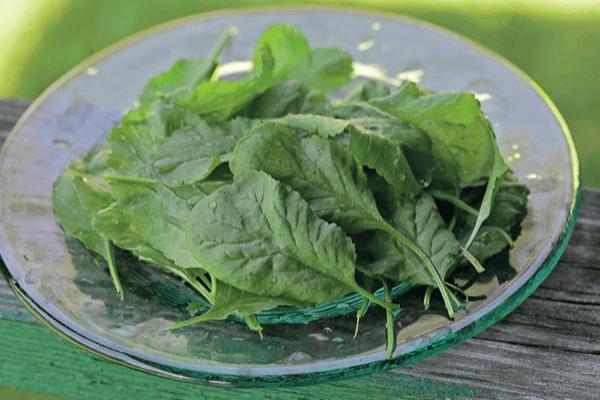 Все о кресс салате: что это, как выглядит, где растет, основные сорта