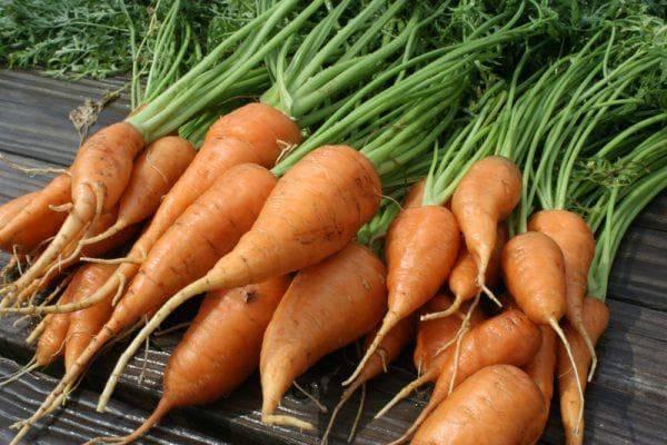 Как поливать морковь после посадки семян