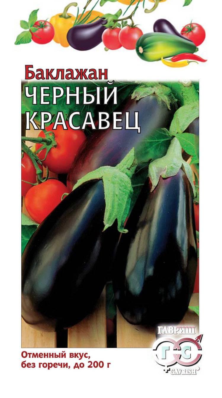 Характеристика сорта баклажана черный красавец. правила выращивания и ухода