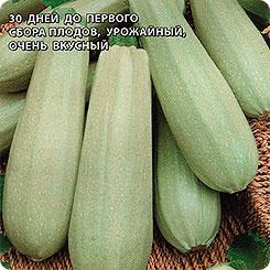 Описание самых урожайных сортов кабачков для открытого грунта