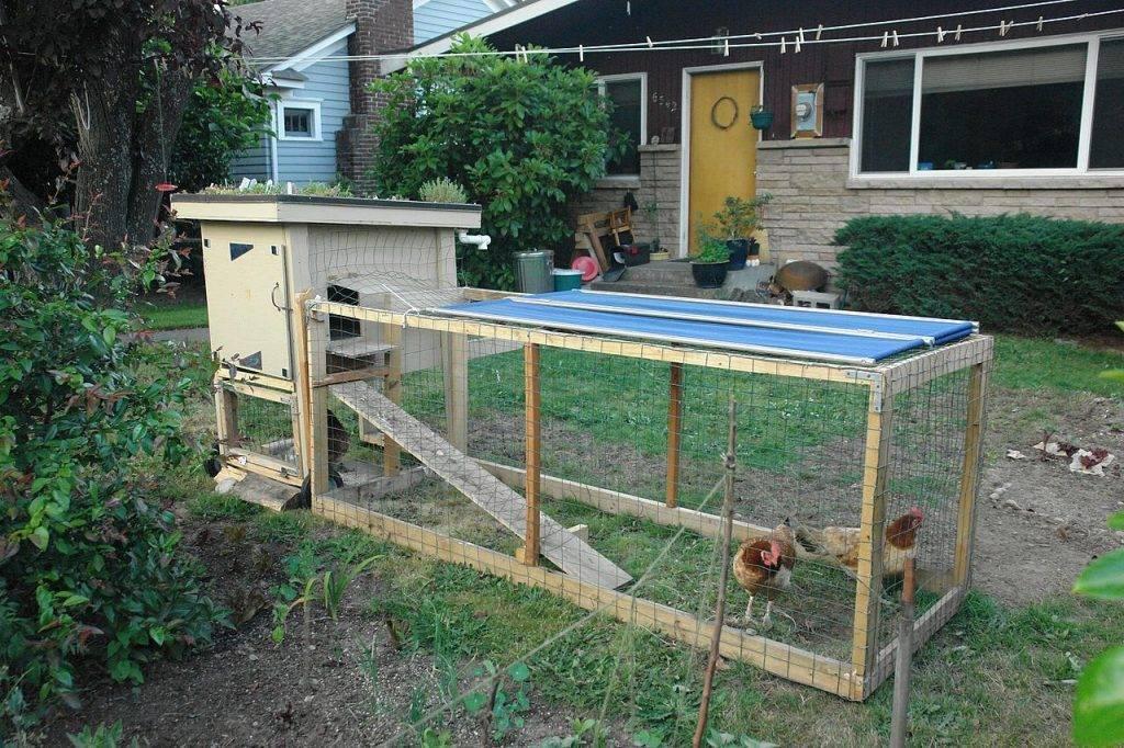 Передвижной загон для кур. вольер и загон для цыплят: делюсь опытом. садовый тип конструкции
